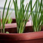 5 овощей и трав, которые ты можешь вырастить у себя на подоконнике зимой