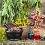 Эффективные травы для похудения: список стройнящих растений и как их принимать