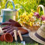 Все, что вам нужно знать о создании вашего овощного сада